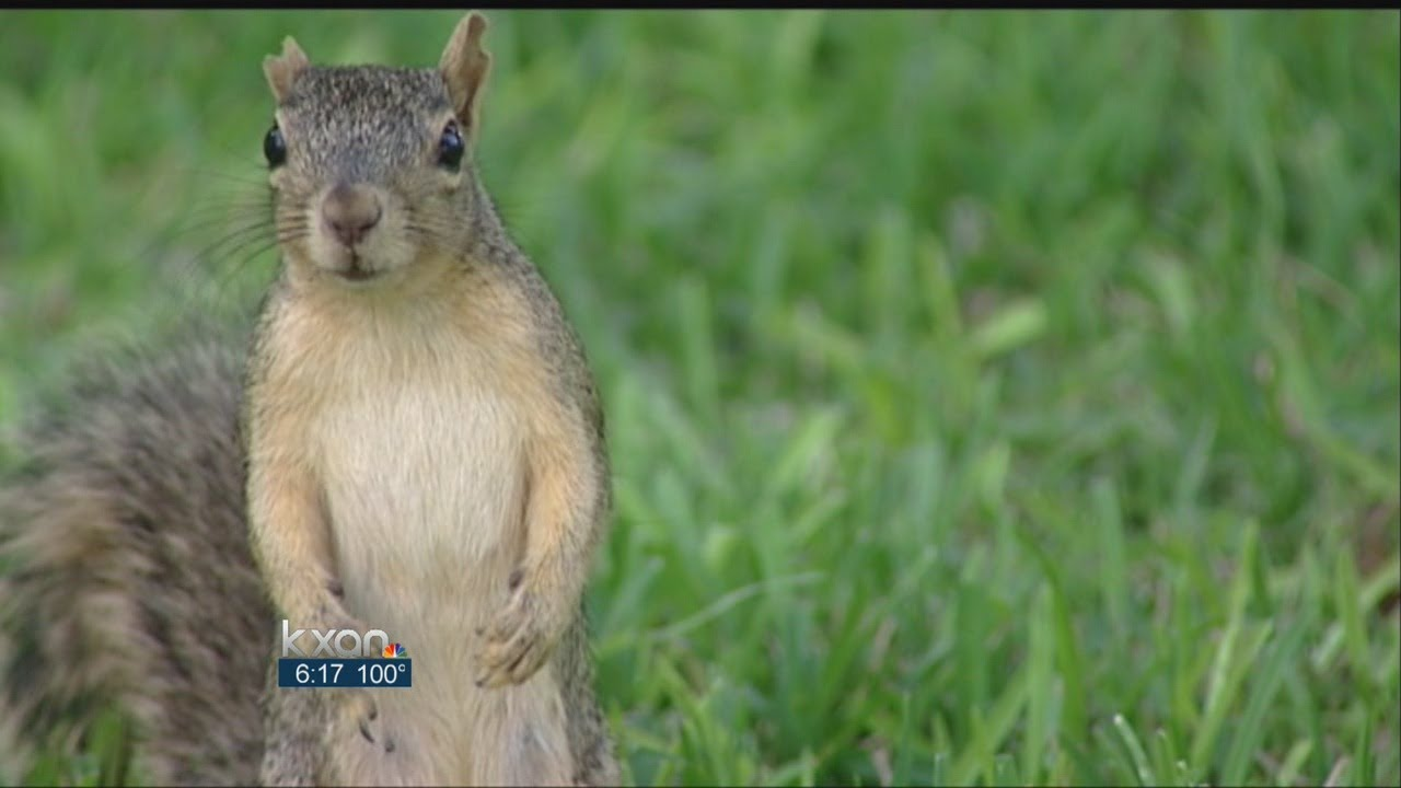 Squirrels Responsible For Hundreds Of Power Outages - Smashpipe Entertainment
