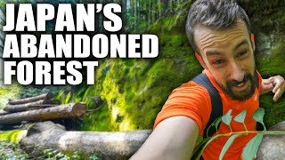 Solo Hiking Japan's Forgotten Forest