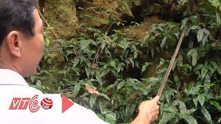 Bí ẩn hầm vàng ở Hà Nam | VTC