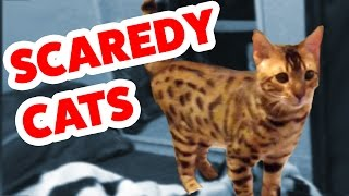 Funniest Scaredy Cat Home Videos of 2016 Weekly Compilation | Funny Pet Videos