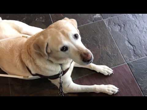 I'm at the nail salon with my guide dog… Communication challenges as a blind individual