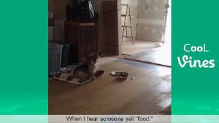Funny cats and dogs...try not to laugh😂😂😂😂😍😍😍