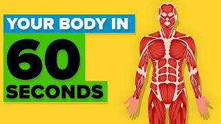 This Will Happen In Your Body In The Next 60 Seconds
