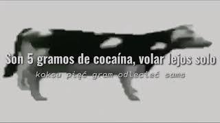 Cypis- Gdzie jest biały węgorz ?| Sub Español + Polskie (Polaco)