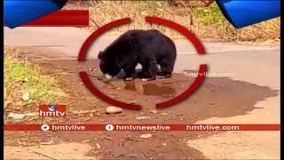 Bear Hulchul In Allagadda..