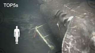 5 Most Mysterious & Unexplained Sea Creatures