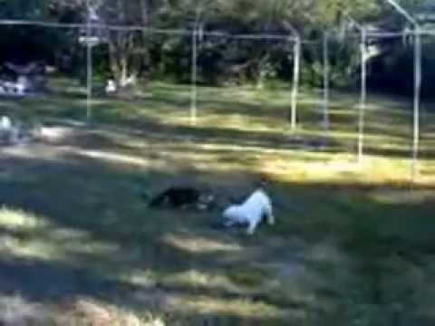 Cat Fence Pvc Youtube