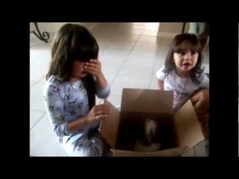 Touching beginning of new friendships - Puppy Surprise Present Compilation