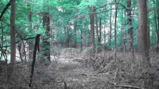 Woods Update 2