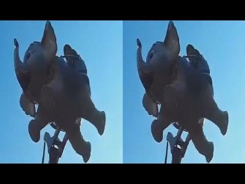 Flying Elephants in 3D ! Fun Children's Attraction! 3D VIDEO