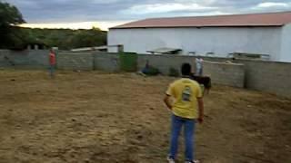 Capea con vaquilla