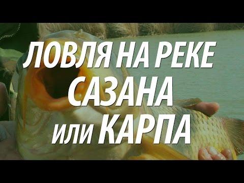 ловля толстолобика осенью на технопланктон видео