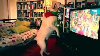 Labrador dog celebrates goal