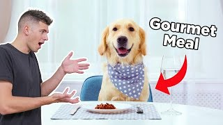 I Cooked My Dog A Gourmet 3-Course Meal