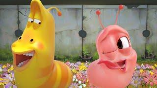 LARVA   Amor rosa   Dibujos animados para niños   WildBrain