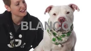 Adopt Blanco at NKLA