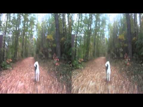 Husky Biking