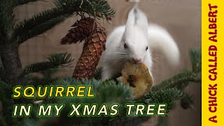 Blind Squirrel needs a home for Christmas