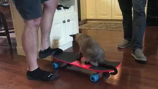 An Einstein and a skateboard