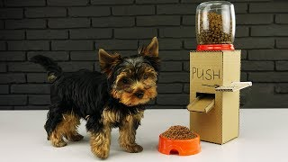 DIY Puppy Dog Food Dispenser from Cardboard at Home