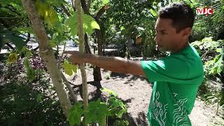 Horta Comunitária de Casa Amarela completa três anos