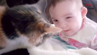 Most Crazy cats and dogs Annoying Babies,If you laugh you lose challenge l by Break Time