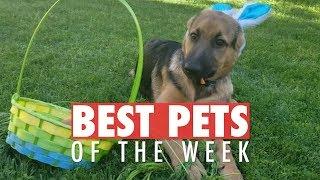 Best Pets of the Week   May 2018 Week 1