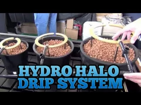 Air lift hydroponic system musica movil for Indoor gardening documentary