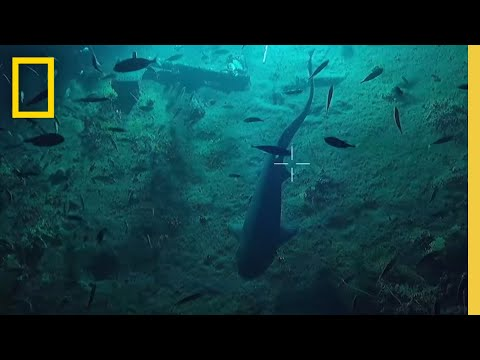 Deep Sea Shark Stakeout | National Geographic