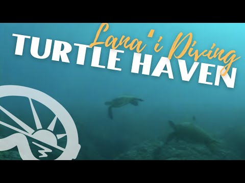"""Turtle Haven"" dive site off Lanai with Extended Horizons Scuba, Maui, Hawaii"