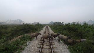 Train Driver record SE5 Ninh Binh - Vinh (2017)