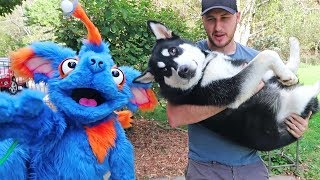Cute Dog vs Dog Puppet - Funny Dogs