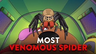 What If You Were Bitten By The Most Venomous Spider?