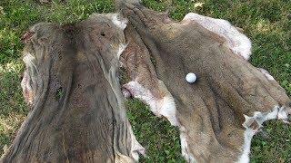 How to Skin a Deer Using a Golf Ball
