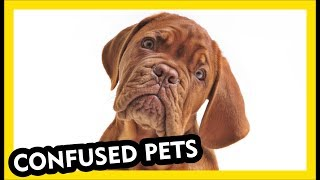 Confused Pets - Funniest Compilation Video Part 2