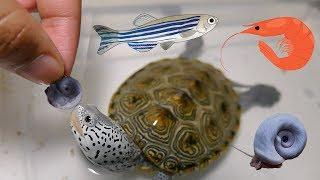 FEEDiNG TURTLE LiVE FOOD | Snails, Fish, Shrimp, Oh My!