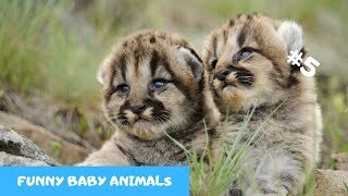 Adorable baby animals Videos Compilation cute moment of the animals PART 5