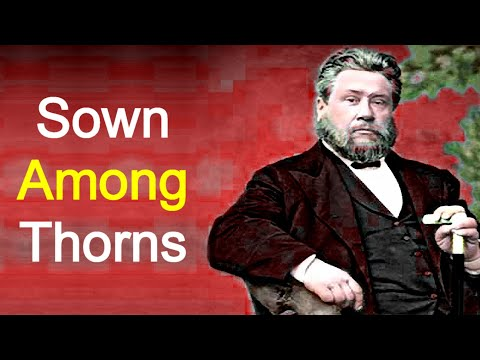 Sown Among Thorns - Charles Spurgeon Sermon