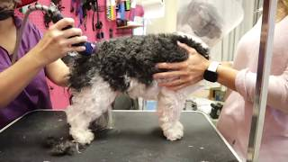 Parent Assist Dog Grooming live!