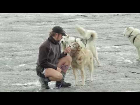 Baixar She Wolf (Falling To Pieces) [Behind the Scenes]