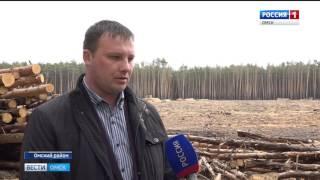 В курортной зоне Чернолучья спилили вековые сосны