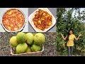 Traditional Nimbu Achar - Lemon Pickles Video Recipe   Bhavnas Kitchen
