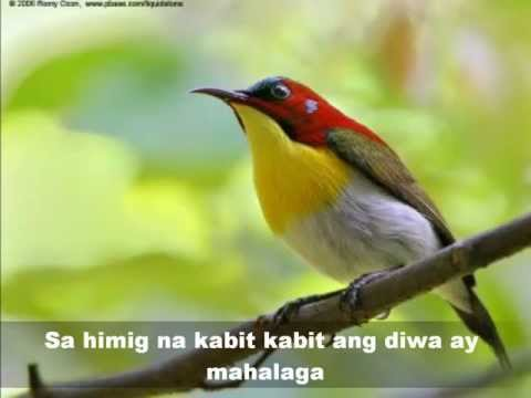 MAY IBONG KAKANTA KANTA (Mabuhay Singers)  Beautiful birds pics.wmv