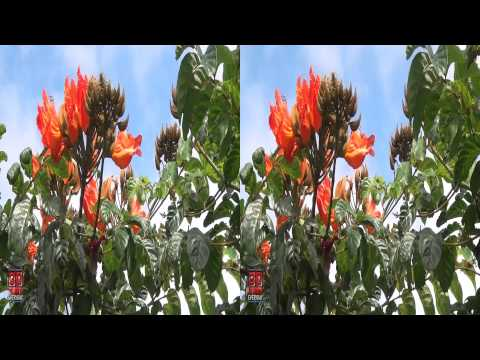 3D Video extreme!!! (evo 3D Works) 3D Flowers Hawaii