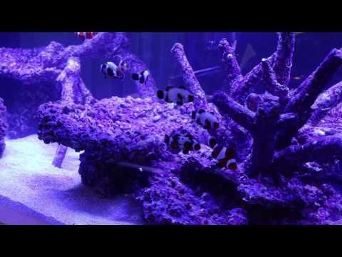 Planet Aquarium drop-off  tank Macna 2016