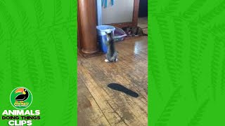 Cat Plays with Trashcan | Animals Doing Things