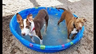 Playgroups Bring Joy to Homeless Dogs