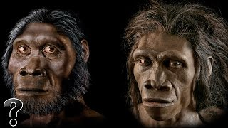 Did Humans Evolve From Apes?