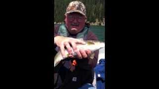 Bald Eagle takes dads fish