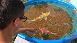 Mini POND EMERGENCY!! NEW COLORFUL FISH